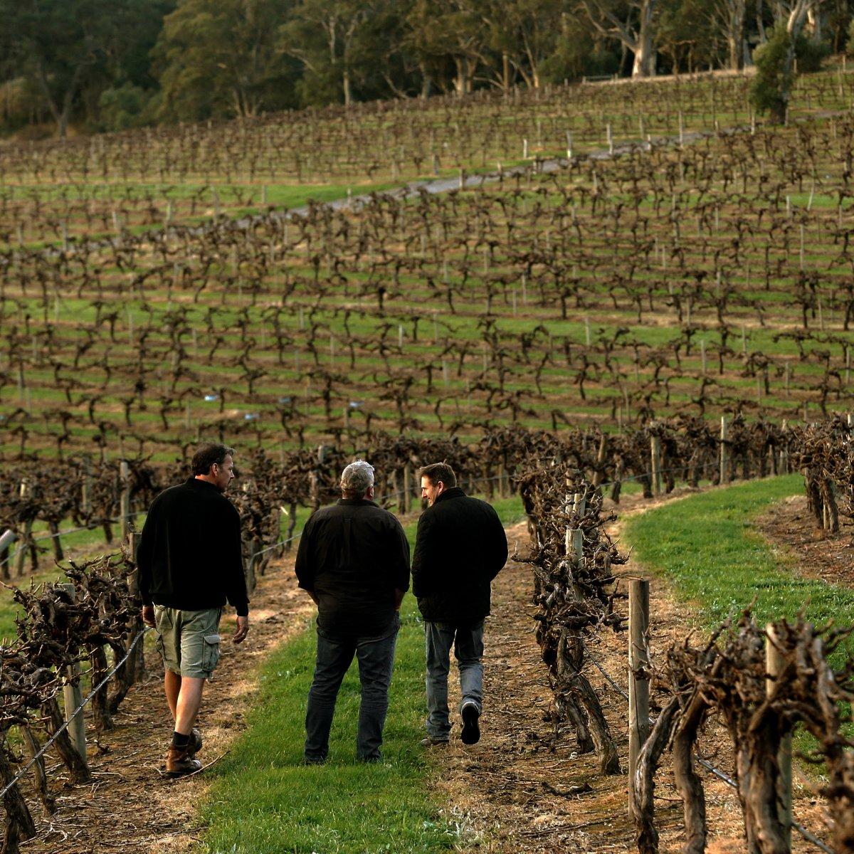 Winemakers walking in Hickinbotham vineyard