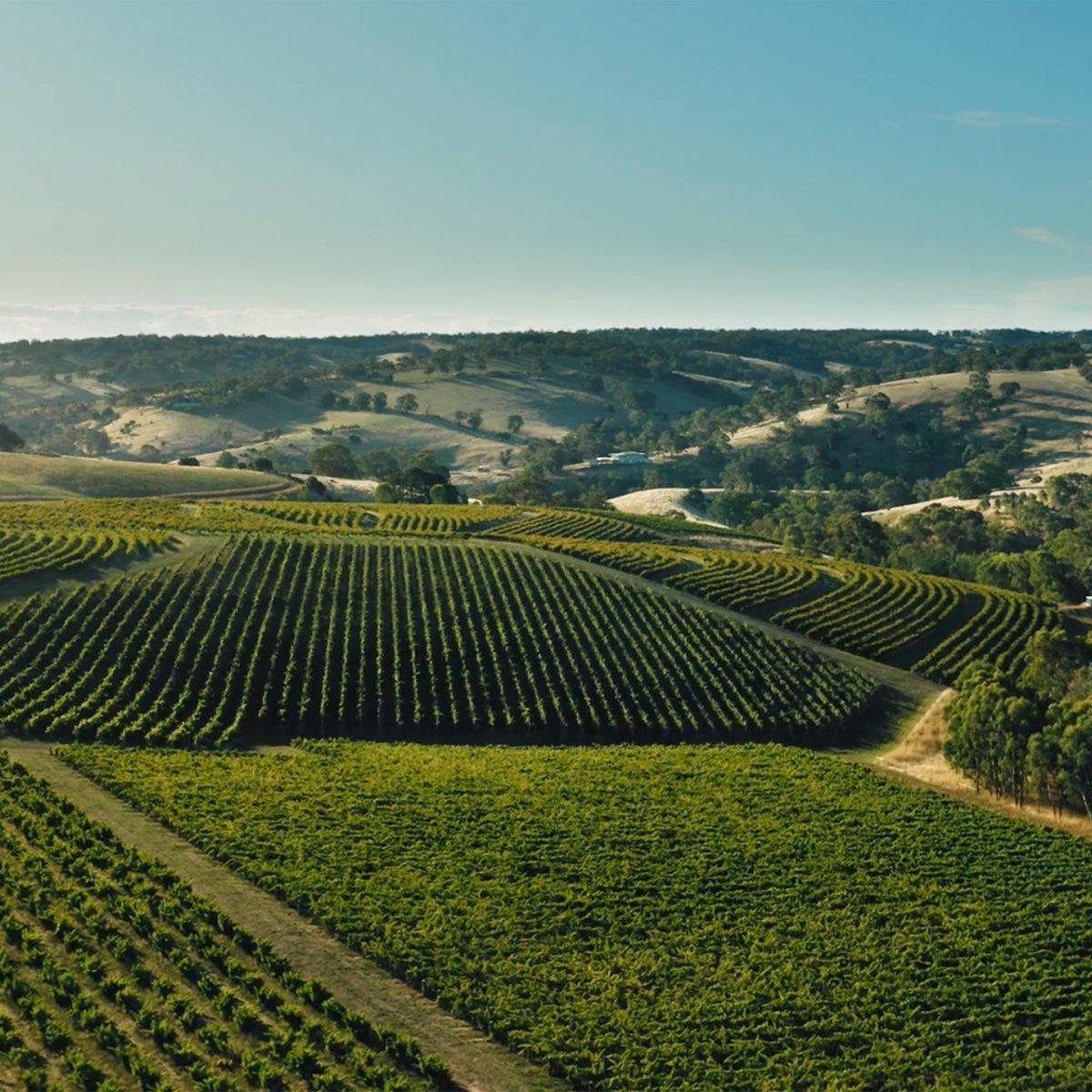 Aerial photo above Hickinbotham Clarendon Vineyards