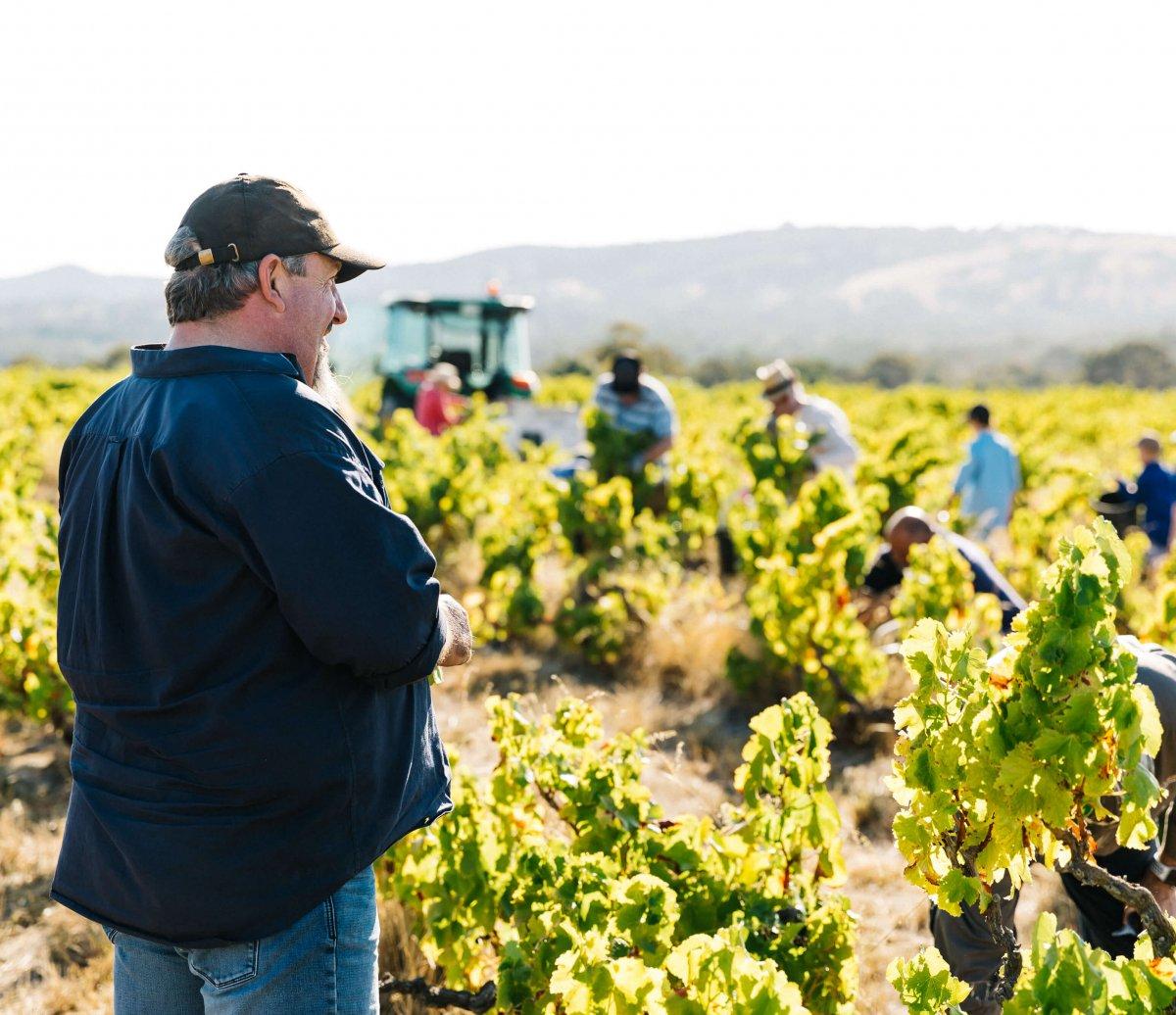 Michael Lane overseeing Yangarra vineyard