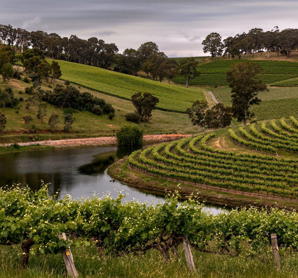 Hickinbotham Vineyards