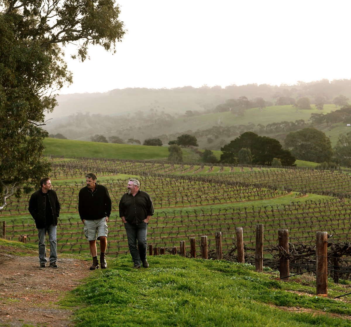 Hickinbotham winemakers walking near vineyards