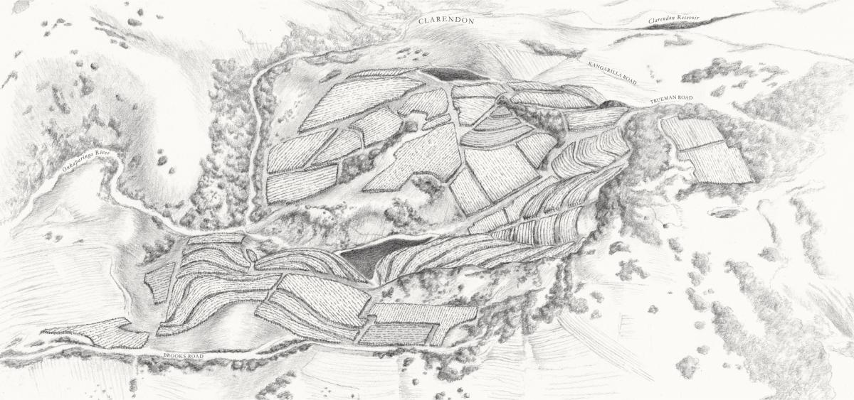 Hand-drawn map of Hickinbotham Clarendon Vineyards showing blocks